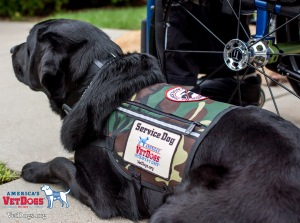 wheelchair dog with logo